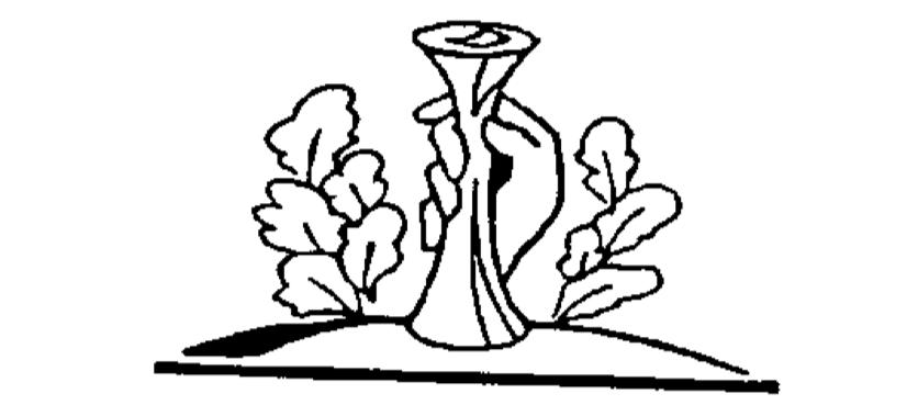 Latvijas Vecmāšu Asociācija